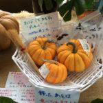 プッチーニかぼちゃ